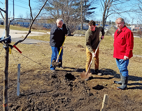 Tischler Potsdam of potsdam marks arbor day with tree planting northcountrynow
