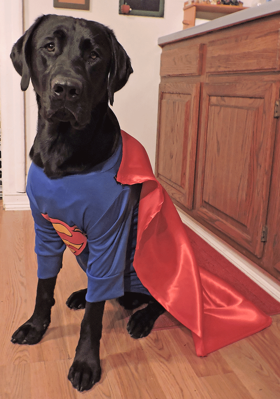 It's a bird…it's a plane…no, it's 'Super Dog Niko Davidson.' Photo submitted by Rachel Skelly of Madrid.