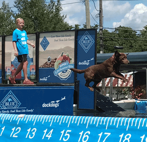 Gunnar, owned by Carolina Burnard, was in first place in the amateur division on Saturday in the Big Air long jump competition at Potsdam Agway.