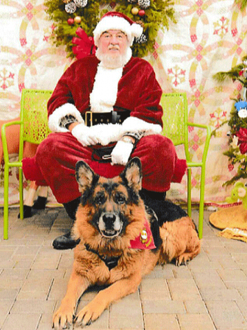 Service dog Rocky visited Santa on Dec. 3 at Potsdam Agway to help raise funds for Spay Neuter Now. Photo by Genine Gehret of Keepsake Photography.