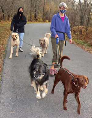 Canton-walking-dogs-1.png