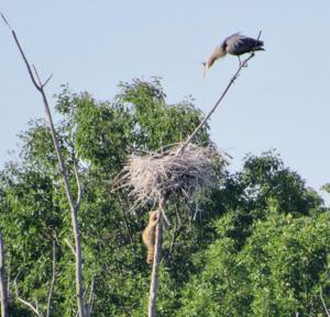 heron nest.jpg