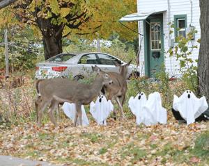 potsdam-yard-deerts.png