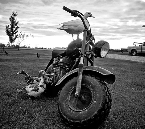 Biker-duck-lisbon.png