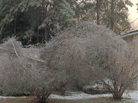 Canton tree ice.jpg