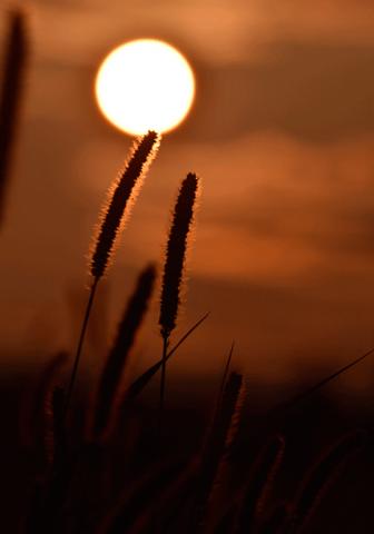 Copper-sun-in-lisbon.png