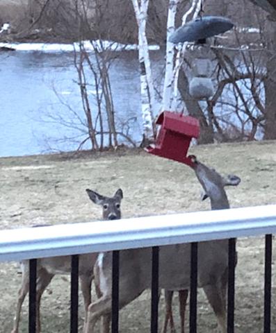 Deer-bird-feeder.png