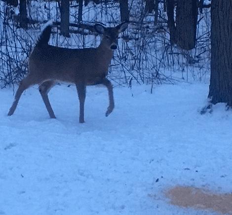 Deer-food-Canton.png