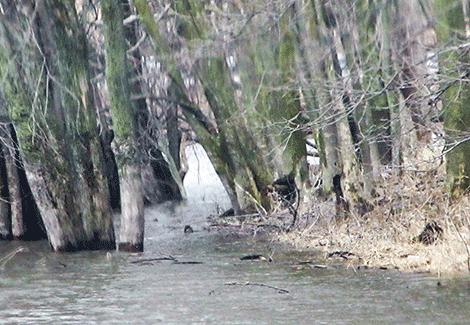 Flooding-Richville.png