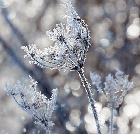 Frozen-foliage-Potsdam.png