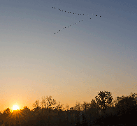 Geese-south-Brasher-Falls.png