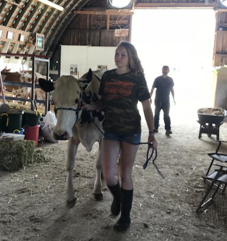 Gouverneur fair cow 2.png