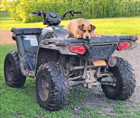 Lisbon-dog-4-wheeler.png