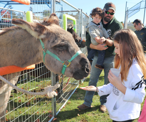 Norfolk-Halloween-donkey.png