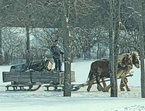 Norwood-amish-sleigh.png