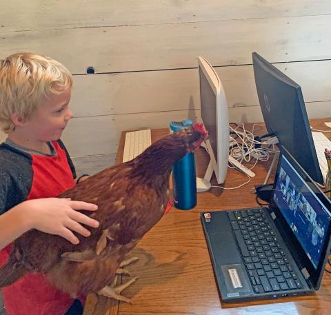 Norwood-chicken-school.png