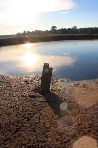 Norwood-dry-stump.png