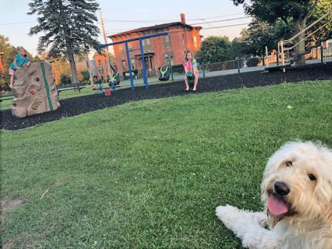 Norwood-playground-dog.png