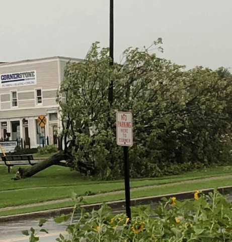Norwood-tree-down.png