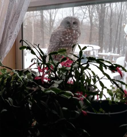 Parishville-owl.png