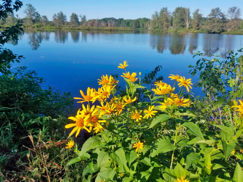 Potsdam-Raquette-River.png
