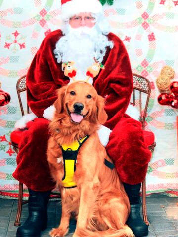 Potsdam-Santa-dog.png