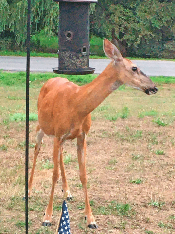 Potsdam-deer-bird-feeder.png