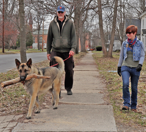 Potsdam-dog-stick.png