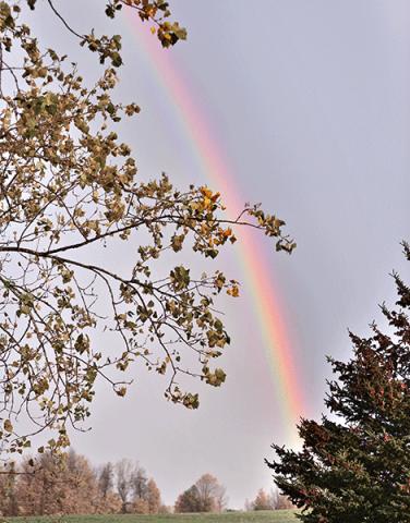 Rainbow-Pierrepont.png
