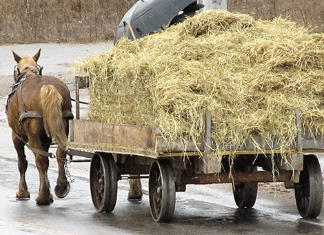 Richville-horse-hay.png