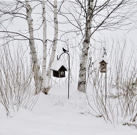 Snow-birds-Richville.png