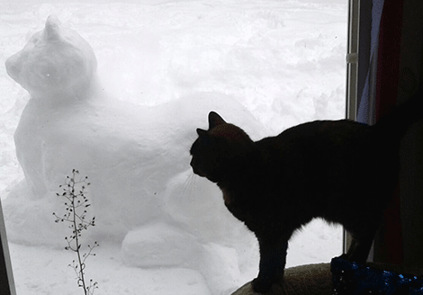 Snow-cat-St.-Regis-Falls.png