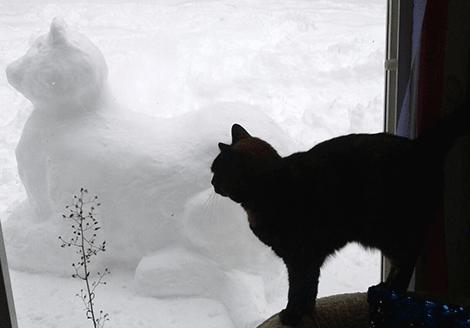 Snow-cat-St.-Regis-Falls.png
