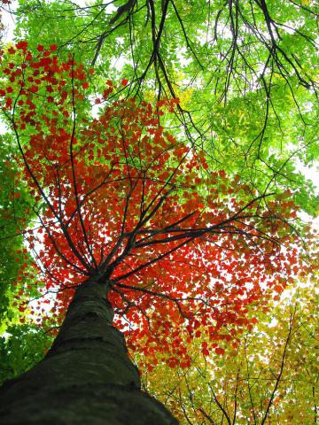 St.-Regis-Falls-Colors.png
