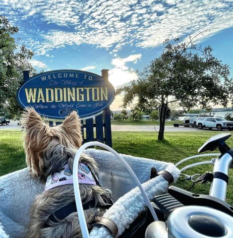 Waddington-Bassmasters-dog-photo(1).png