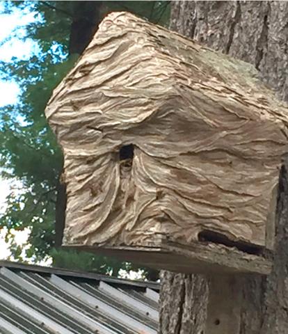 Waddinton-bird-hive.png