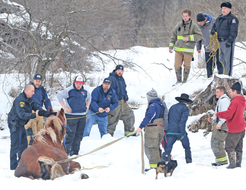 Winthrop-horse-rescue.png