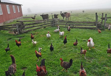 lisbon-animal-farm.png