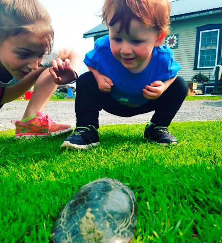 madrid-turtle-fun.png