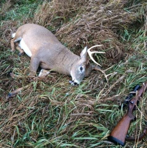 mattot deer.jpg