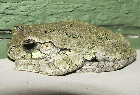 richville-toad.png