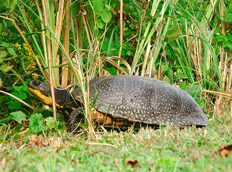 turtle-madrid.png