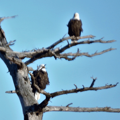 waddington-eagles.png
