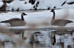 Cold-swim-Richville.png