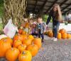 Amish-pumpkins-Norfolk.png