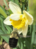 Bee-flower-Canton.png