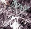 Brasher-Falls-snowflake.png