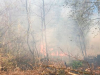 Brasher-forest-fire.png