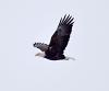 Brasher-free-bird.png