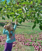 Brookedale-Orchard-apples.png